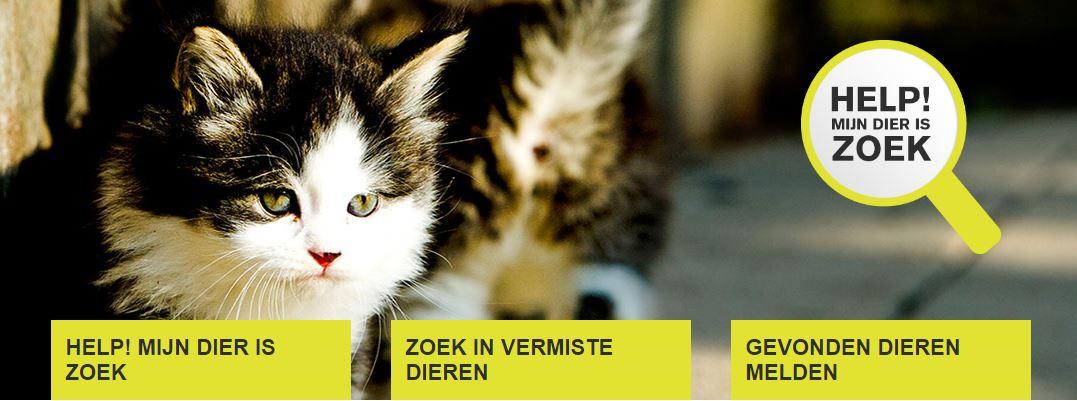 """dierenbescherming on twitter: """"huisdier zoek of gevonden? op onze"""