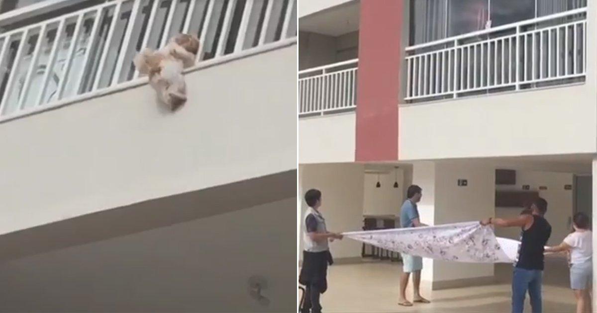 VÍDEO: moradores de prédio abrem lençol antes de cadela cair de apartamento em Goiânia https://t.co/G0eg8IFeTt