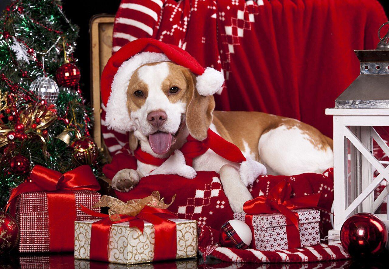 Смешные картинки животных с новым годом