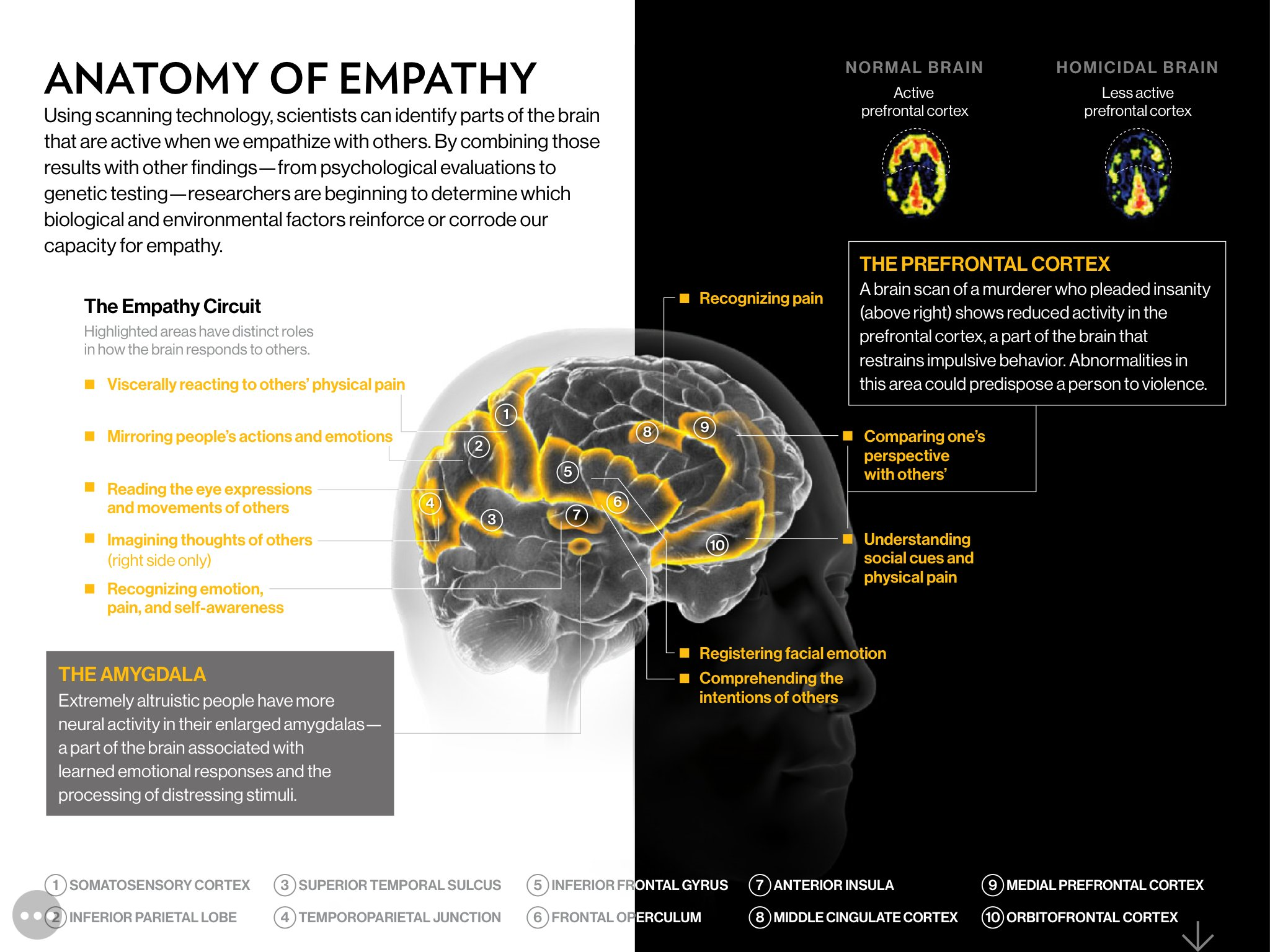 "María J. Díaz Candamio on Twitter: ""#Empathy Scientists know brain circuit # anatomy and how it is activated and suppressed But we are far away from changing people's capacity for empathy 😅 @NatGeo"