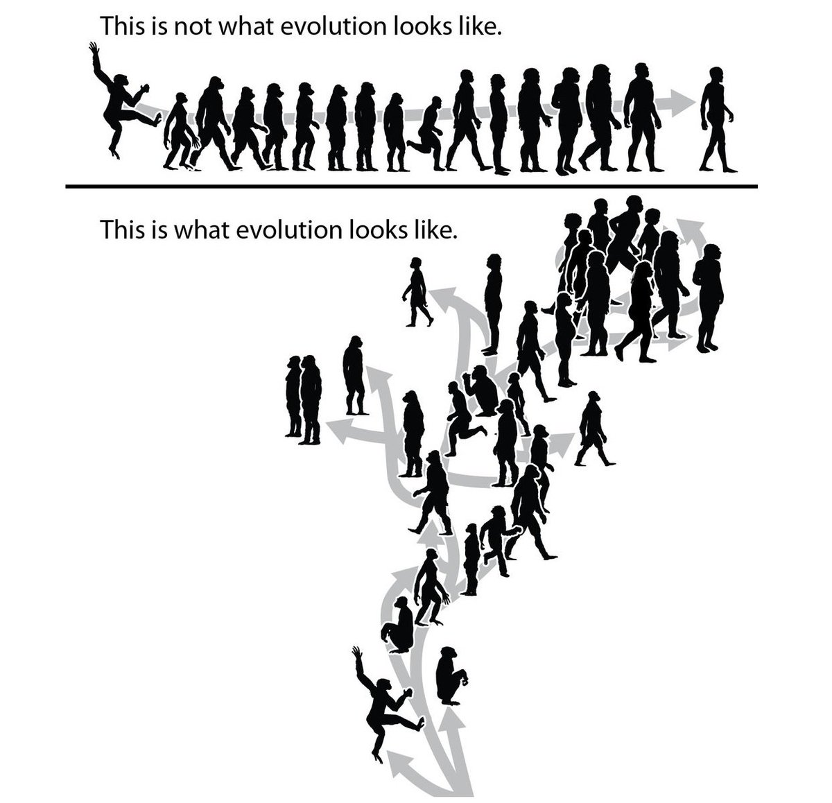 #Evolution @tmkeesey @PhyloPic