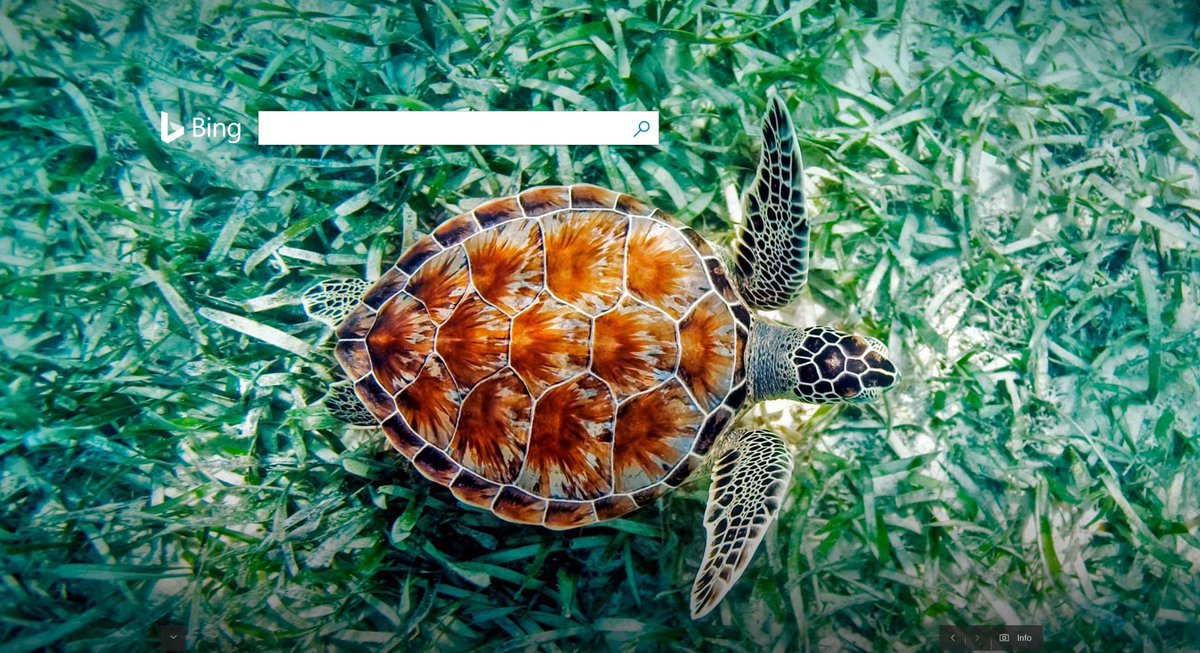 Bing Uk On Twitter This Green Sea Turtle Is Gliding Through The