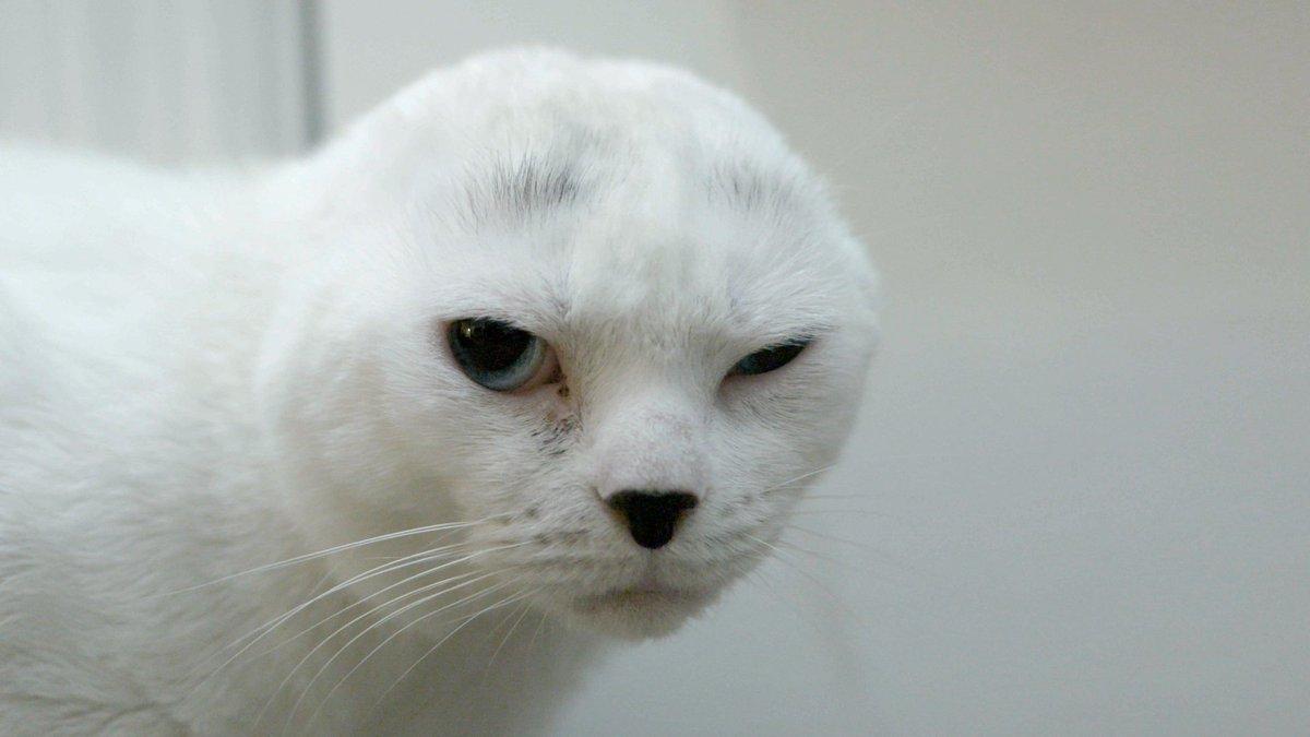 стоимость семьдесят порода кошек без ушей фото этом