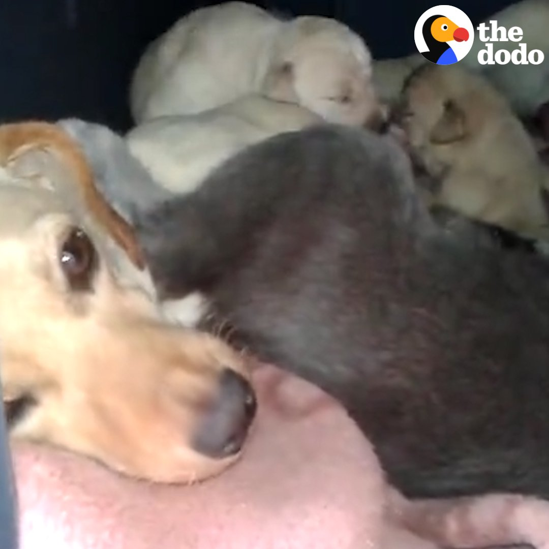 This mama dog was keeping her puppies warm inside a doghouse when someone else decided to join her 💞