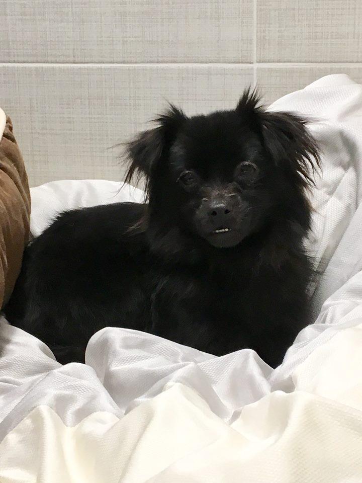 Permalink to Salem Animal Shelter Dog Left