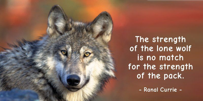 Ranal Currie On Twitter The Strength Of The Lone Wolf Is No Match