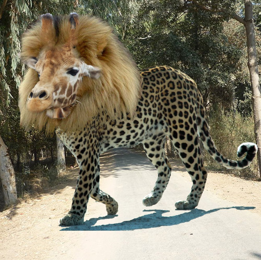 """Alucard on Twitter: """"googled lion mixed with cheetah, I am ..."""