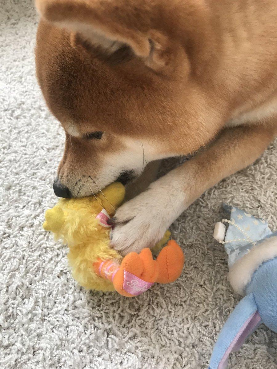 #今日のおは犬 版権を次々と食いちぎる犬