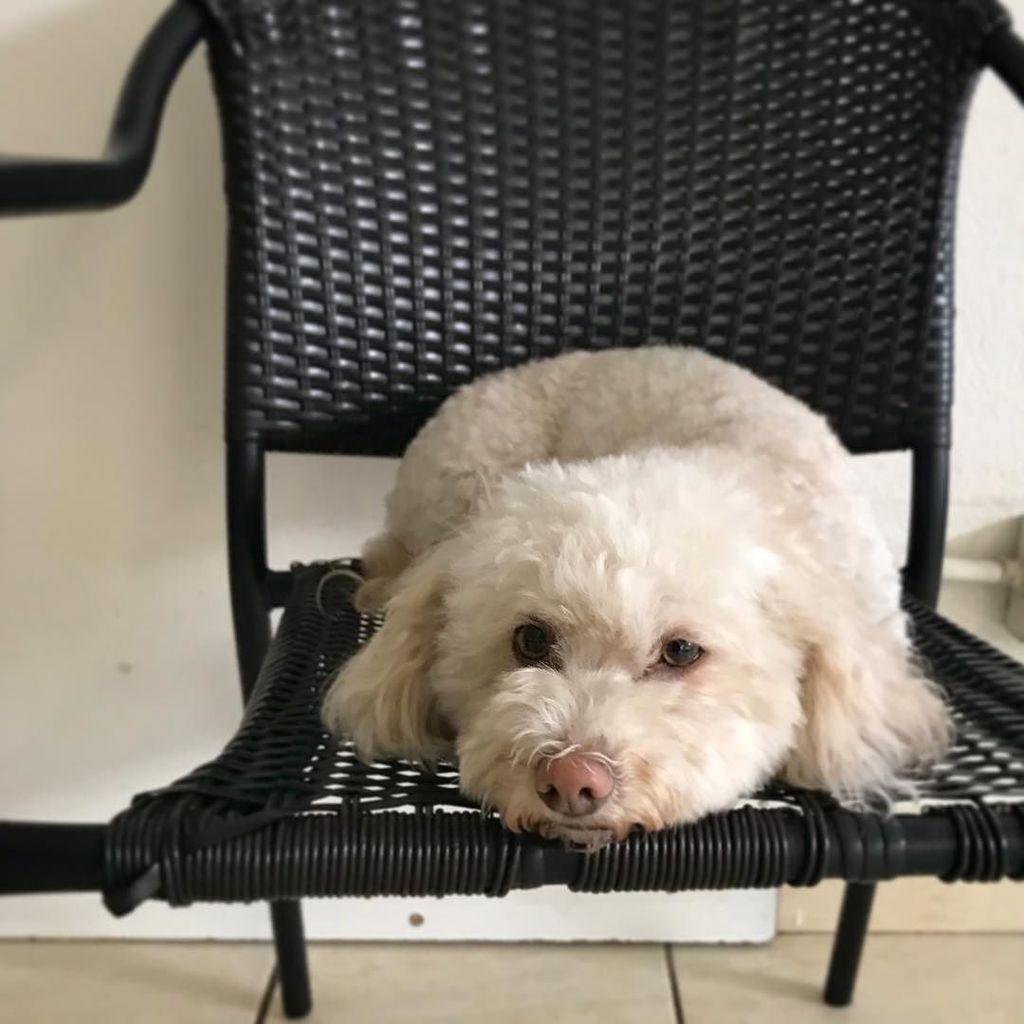 It's a new year! Let's get going on those resolutions, right? . . #happynewyear #doggydaycare #mountainview #bayareadog #californiadog #southbay #petsitters #petsittingtothemax #daycarelife #siliconvalleydog #smalldogsrule #whitedog #getupandgo #tothemax http://bit.ly/2lL1tflpic.twitter.com/1fUXhcgRbr