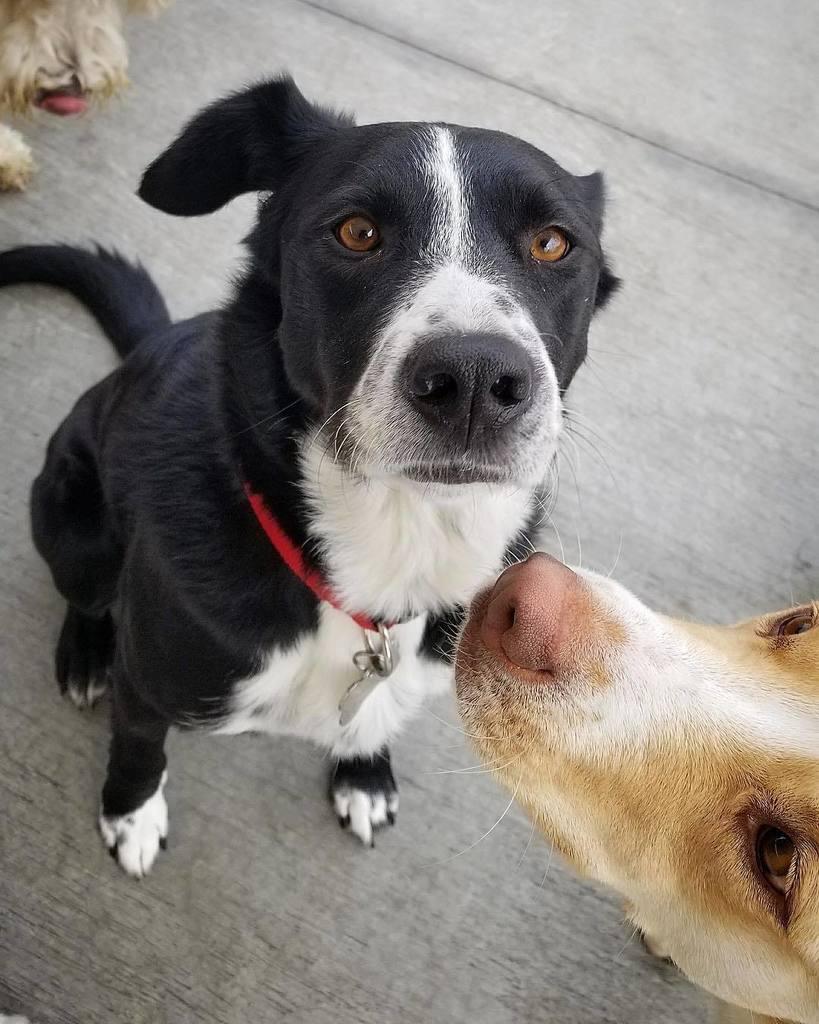 """IS HE DOING YOUR PICTURE?!"" - Colby . . #photobomb #dogportrait #doggydaycare #mountainview #bayareadog #californiadog #southbay #petsitters #petsittingtothemax #daycarelife #siliconvalleydog #blackandwhitedog #tothemax http://bit.ly/2qjiWjwpic.twitter.com/ZFrg1ZhSlP"