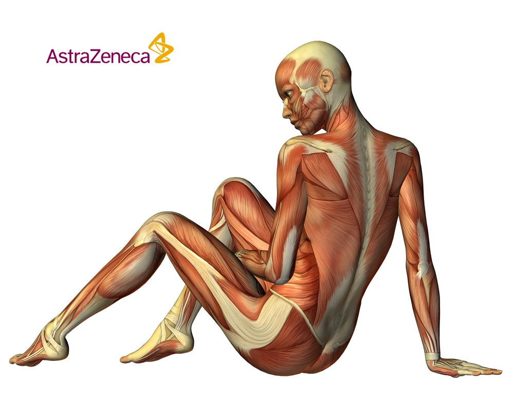 Astrazenecauk There Are About 320 Pairs Of Muscles In
