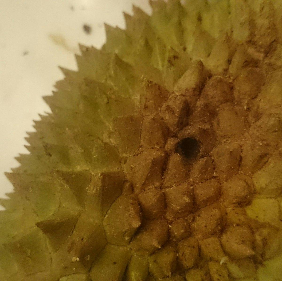 D Sein On Twitter Hehehe Btw Ulat Buah Boleh Dimakan Ye Sbb Bukan Apa Yg Durian Season Lepas Yg Byk Dri Siam Tu Even Ulat N Lalat Pun Taknak Dkt Itu Tandanya