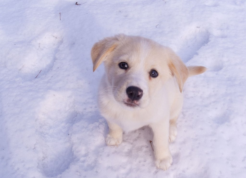 Protect your pooch from the cold! https:...