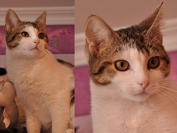 L Etoile Feline على تويتر Winx Est Une Petite Chatonne A Adopter Tres Douce Qui Aime Les Calins Dans Les Bras Comme Tout Petit Chat Elle Se Montre Discrete Et Reservee Au Debut