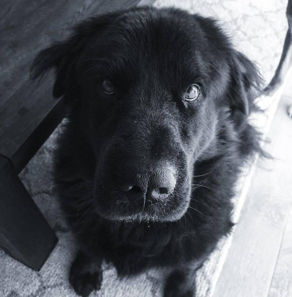We miss you our darling SMOOOOOSE! We'll see you soon buddy! ❤️❤️❤️ https://t.co/7i5ARBplXA