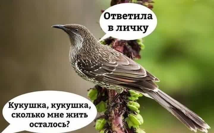 DStNBCiXkAALtP5.jpg