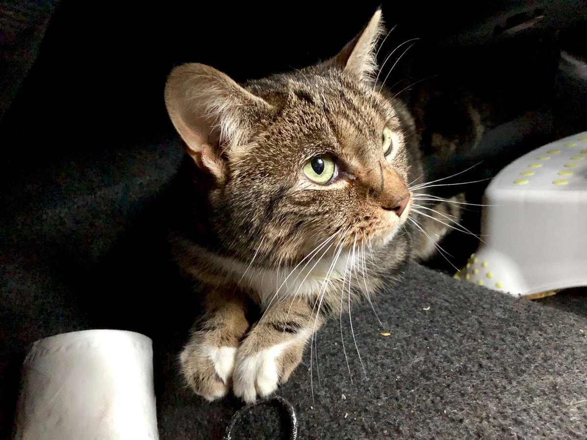 Missing Pets GB MissingPetsGB Twitter - Missing cat gets found next to his own missing cat poster