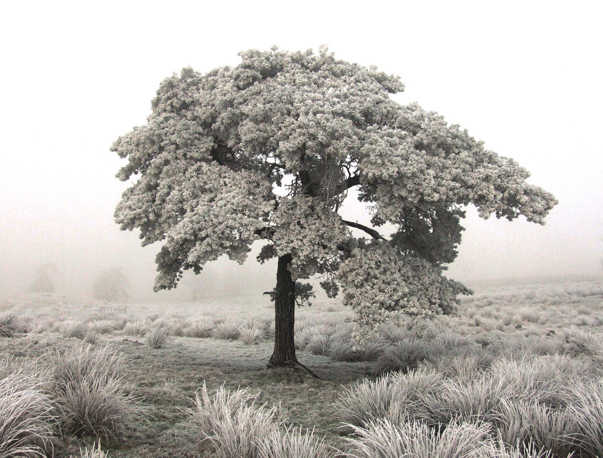 Healthcare And Tree Care Go Hand In Harness The Therapeutic Of Trees Thursdaythoughts Read More At Http Www Woodlandtru St M9weh