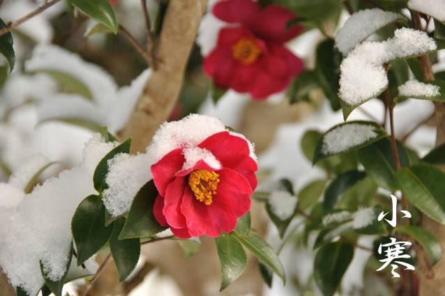 本日1月5日は小寒、二十四節気のひとつです。  一年で最も寒いといわれる「寒」。  その始まりで「寒の入り」といわれるのが、本日です。この日から節分までの期間に送られるのが、寒中見舞いです。  寒中お見舞い申し上げます。  #晴明神社 #京都 #小寒 #二十四節気