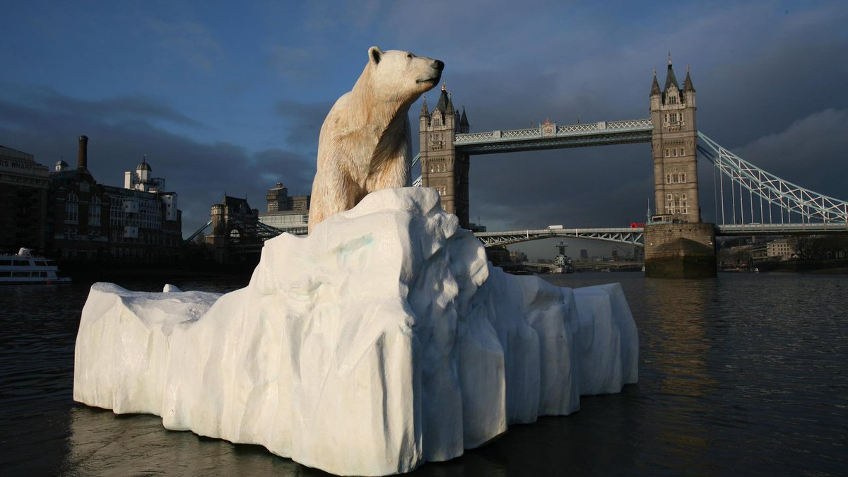Image result for POLAR BEAR SWIMMING IN THAMES