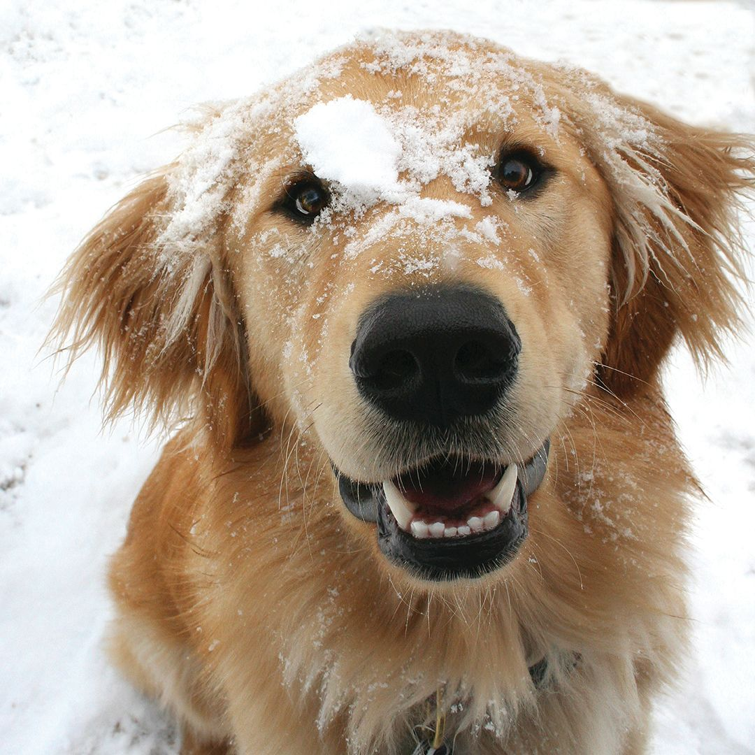 Canine Companions On Twitter Winter Weather Pup Safety Tip 3