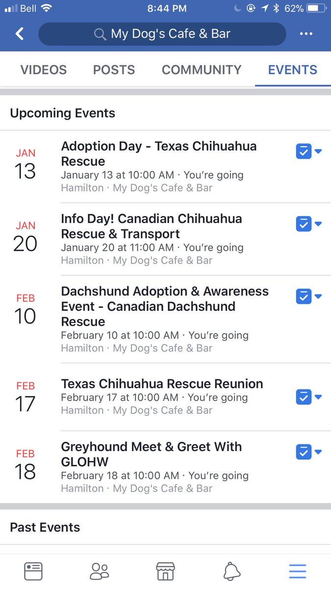 Texas Chihuahua Rescue Hamilton Ontario