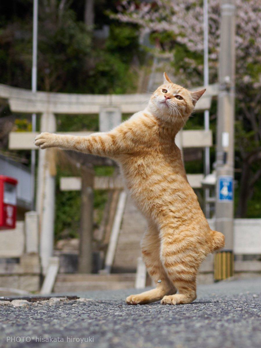 人間よ!  ここを通り!!  初詣に行きたければ!!!  この我を倒してからだああああ!!!! ビシィッ!!