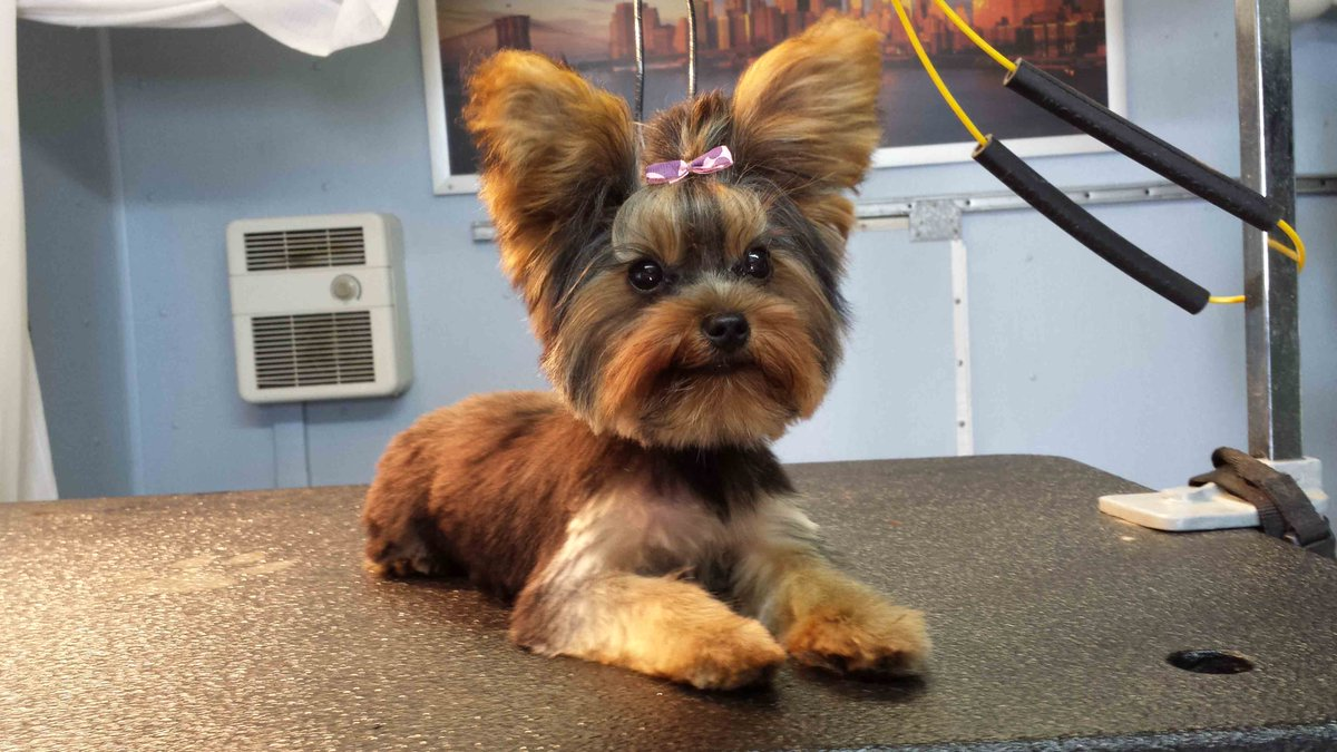 The Velvet Poodle On Twitter Pamper Your Pet Up With A Grooming