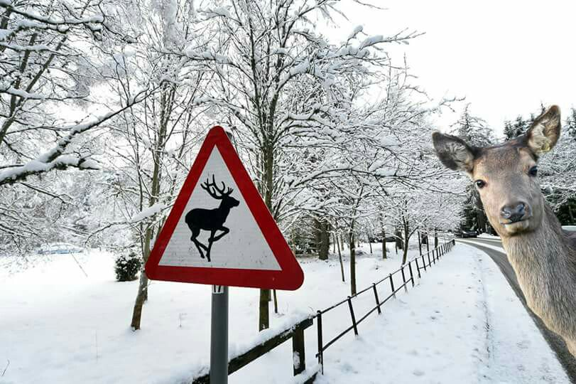 こんなことあんの?ww鹿の標識の前にひょっこりと顔をのぞかせる鹿ww