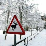 こんなことあんの?鹿の標識の前にひょっこりと顔をのぞかせる鹿