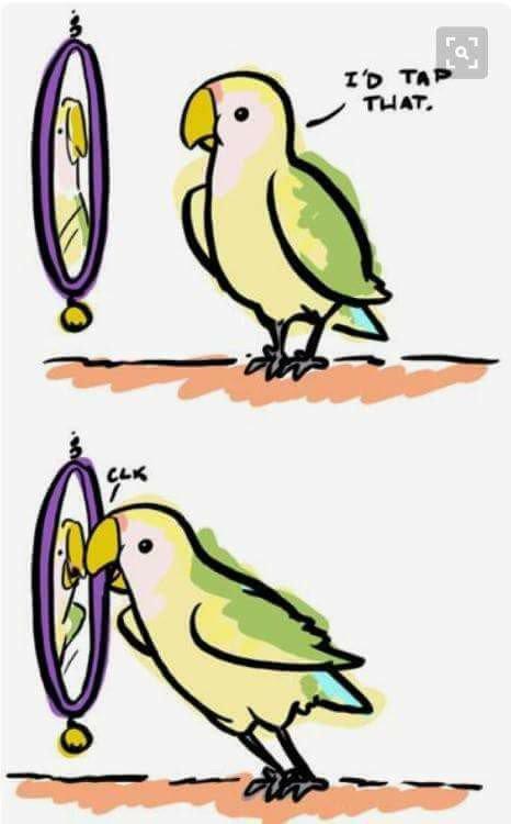 I'd tap that. #birds #parrots #parakeets https://t.co/jDM8rHOeRQ