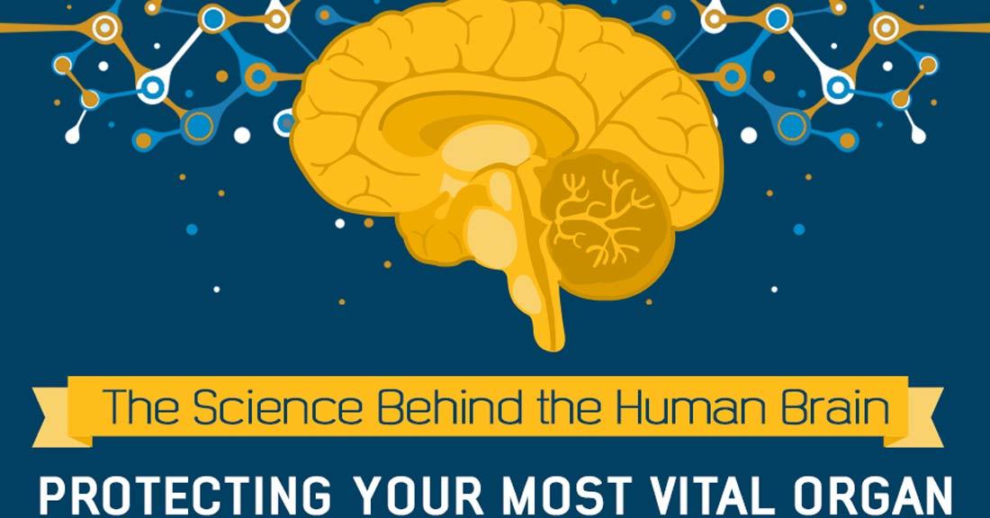 RT The Science Behind the Human Brain ➡ https://t.co/EiOMKMGMn9 https://t.co/jIRtwMoFkD #health #well