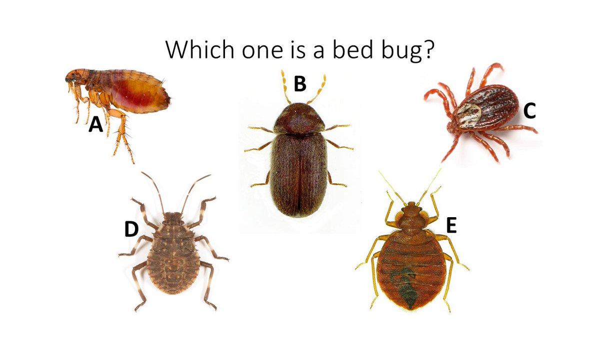 Michael Eisen On Twitter Flea Beetle Tick Bug Bedbug