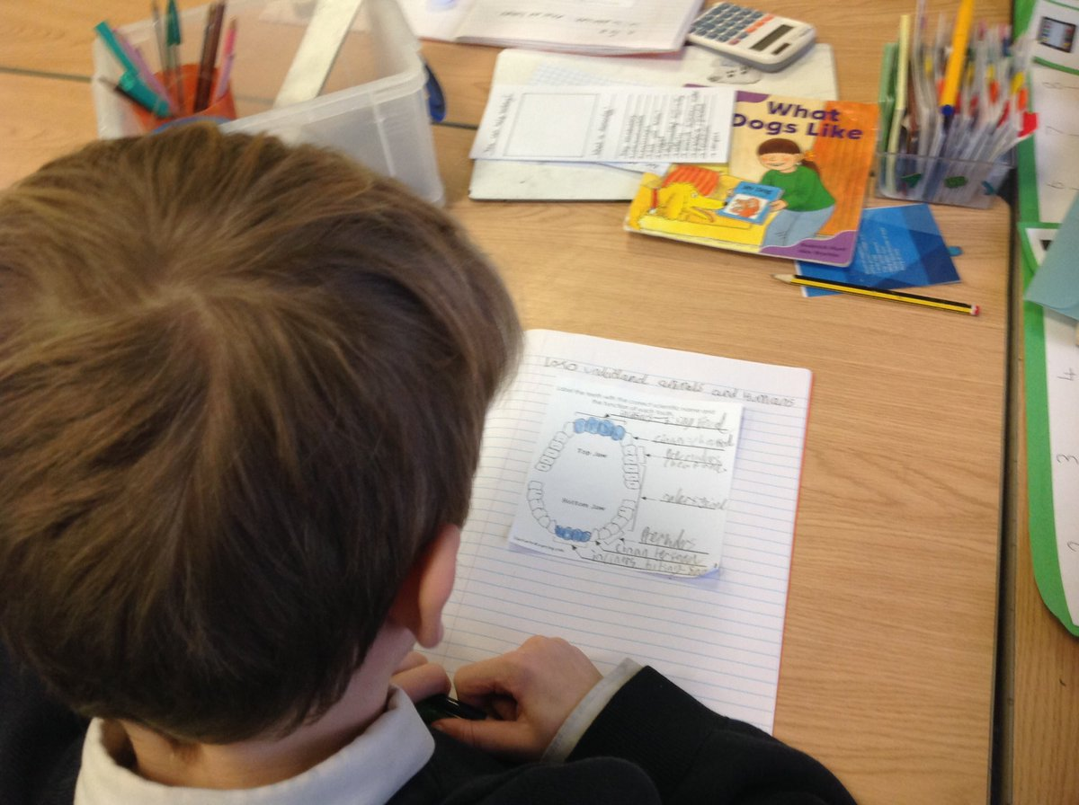 test Twitter Media - Today we are learning about functions of teeth #gorseyscience https://t.co/kICpGSojkc