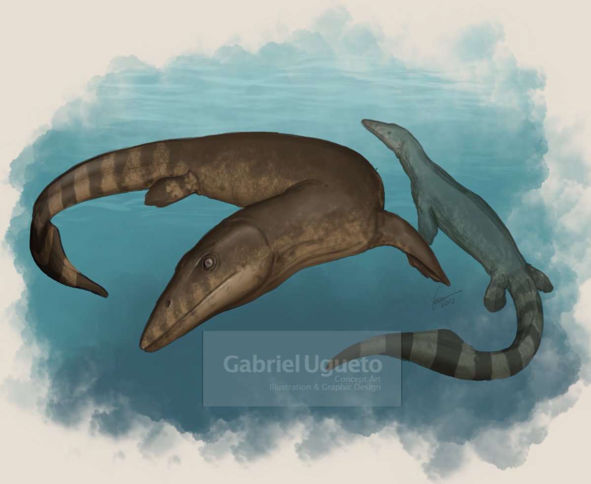 For today's morning warmup sketch: Mosasaurs. This is a pair of Eonatator sternbergii swimming. #paleoart #mosasaurs #lizards #reptiles <br>http://pic.twitter.com/Pm0W2x1C4b