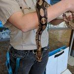 Image for the Tweet beginning: We met a snake today
