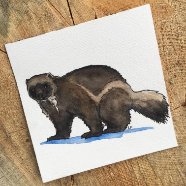 Got news this week that a paper I wrote with @ArcticWCS staff on the distribution of #wolverines across Alaskan North Slope was accepted for publication in Journal of Wildlife Management! To celebrate, I painted this little wolverine. They&#39;re really... brown. #sciart #scicomm<br>http://pic.twitter.com/B6tBPmQxdm