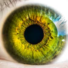Speaking of eyes...keratocytes (corneal stromal cells) and dental pulp stem cells both originate from the from the cranial neural crest. DPSCs can actually differentiate into keratocytes! #cornea #stemcells #SciParty <br>http://pic.twitter.com/BQMXTV9bhH