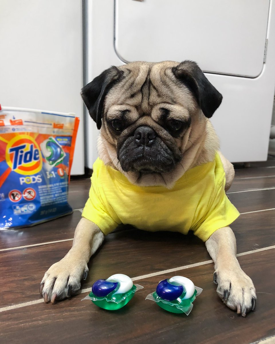 Doug The Pug's photo on Tide