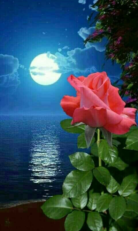 Buenas noches amig@s y seguidores,felice...