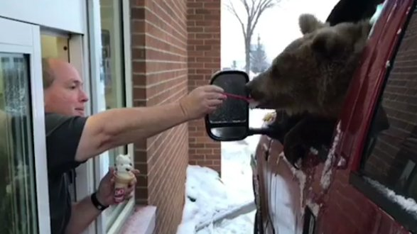 The province of Alberta investigating video that shows a Kodiak bear from Discovery Wildlife Park being hand-fed ice cream at the local Dairy Queen https://t.co/cREHuIhene