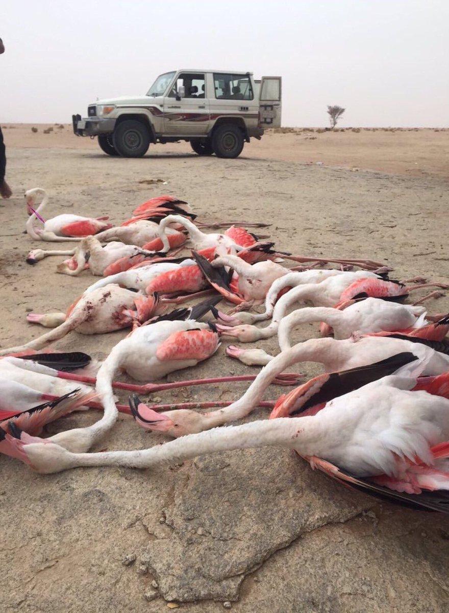RT @omarifi: طائر الفلامنجو .. وصل. #الصور_منقولة https://t.co/W06MU8XzgH
