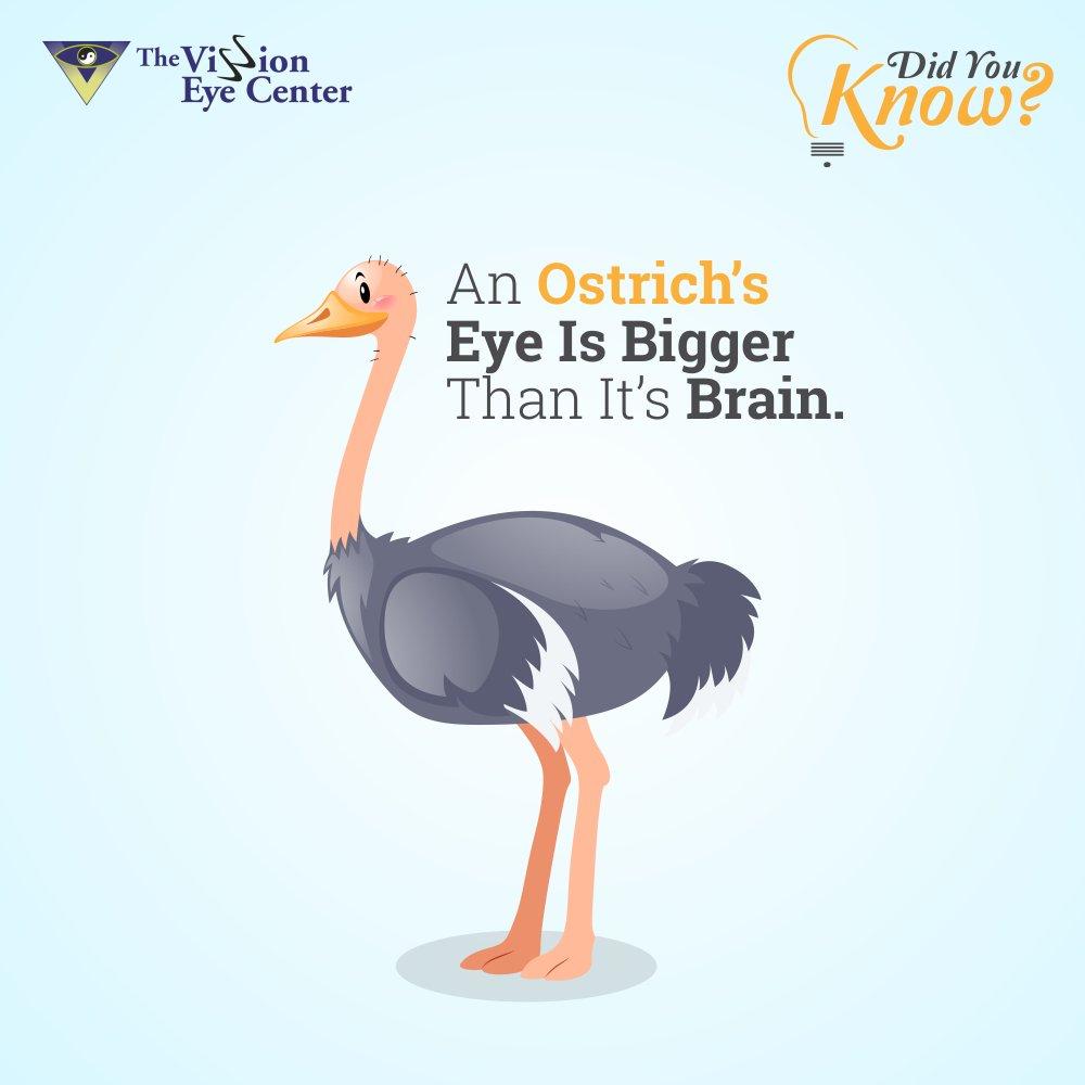Check out this interesting fact... #TheVissionEyeCenter #VissionEye #DrHimanshuMehta #Ophthalmology #DoctorsInMumbai #VissionEyeCenter #Lasik #EyeHealth #EyeCare #MumbaiDoctors #Mumbai #Doctor #EyeCare #EyeDoctorsIndia #EyeDoctorsMumbai #VissionEyeCenterMumbai #OptometistIndia<br>http://pic.twitter.com/in5U8ZIVhZ