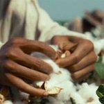 12 Years a Slave (2013) Dir. Steve McQueen cinema stories
