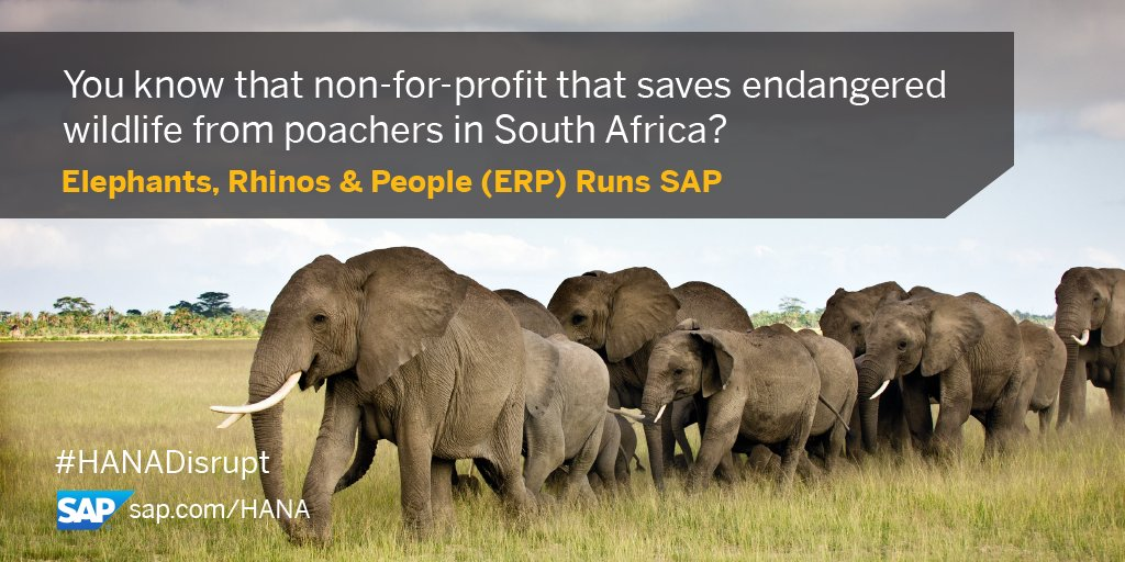 We are extremely proud of this video that @SAP created to show #HANA in action saving #Elephants #Rhinos with @elephantsrhinos, @groupelephant & #EPI-USE teams!