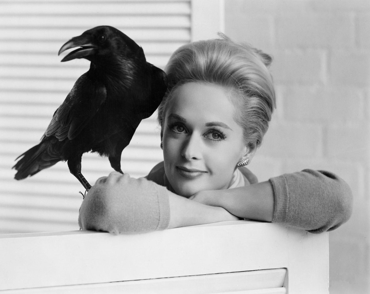 """I grew to love the ravens"" - Tippi Hedren #bornonthisday https://t.co/l6bWsTRyhv"