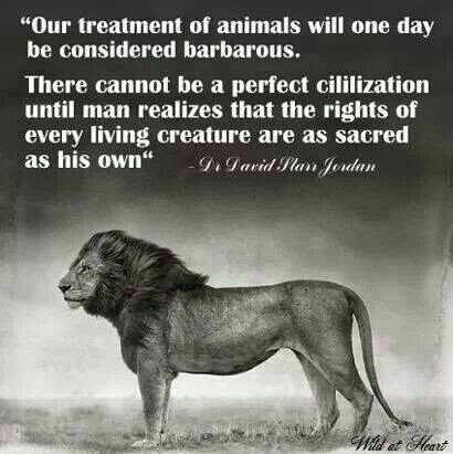 There can&#39;t be #peace or perfect civilisation until man realises the rights of every being are as sacred as his own.  #PeaceDay #NonViolence #Animals #animalcruelty #AnimalKingdom #wildlife #BanTrophyHunting #hunting #BoycottAnimalCircuses #zoo #puppymill #Vegan #govegan<br>http://pic.twitter.com/fSTejgP57P