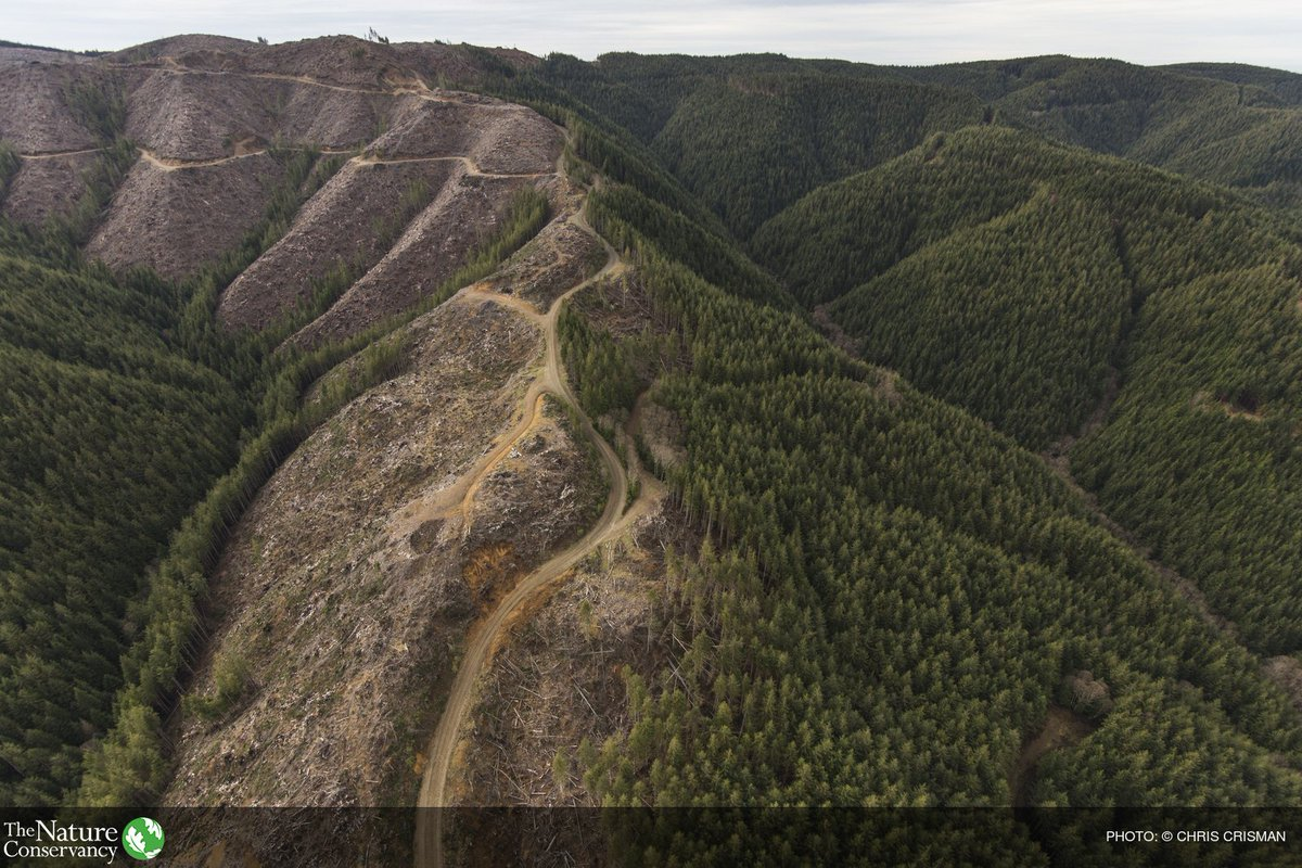 """the nature conservancy on twitter: """"41 million trees are cut down"""