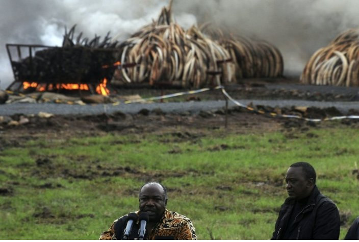 Gabon Says It Busted a Major #Ivory Smug...