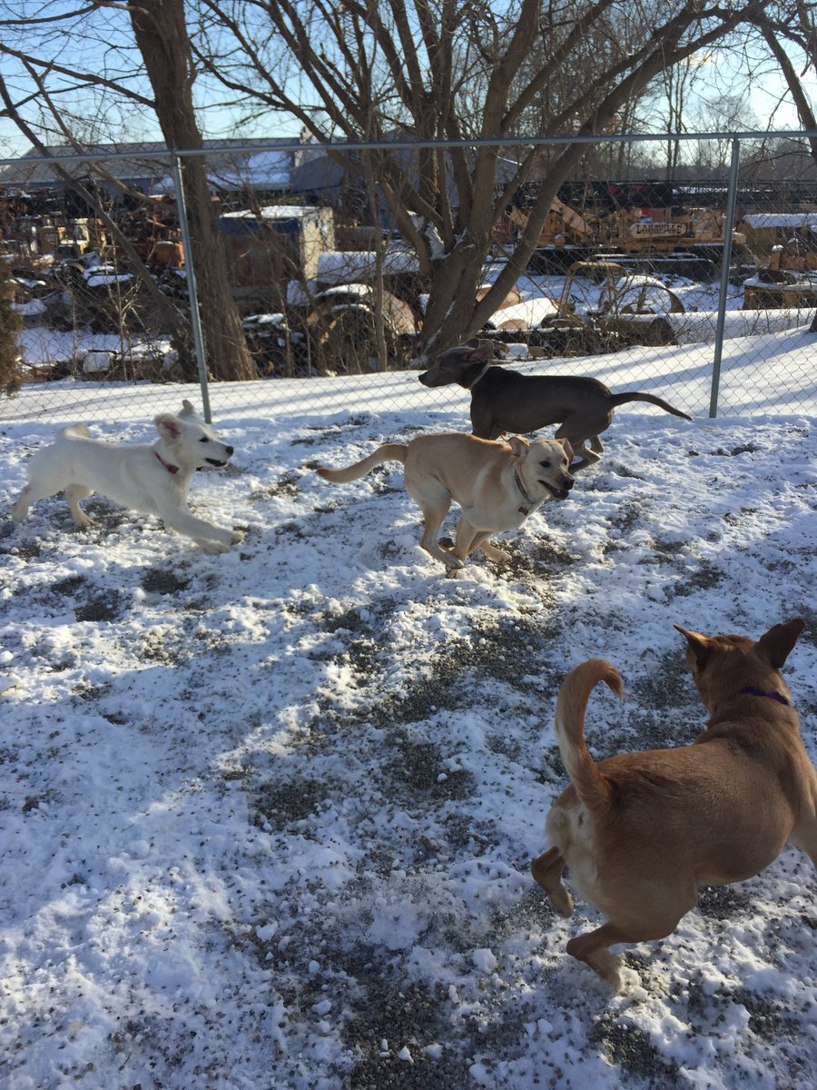 Clary and Stitch try to join in Breslin and Diesel's race